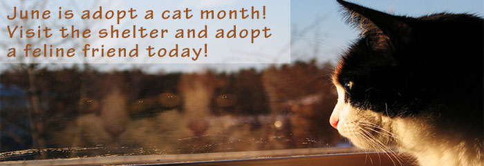 shelter_adopt_a_cat
